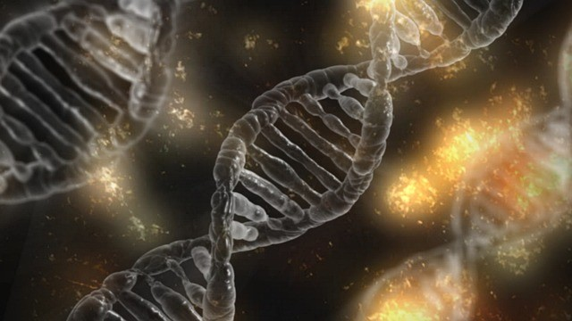 Genetische Tests an Heiratswilligen